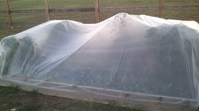 Organic liberty garden wrapped in plastic